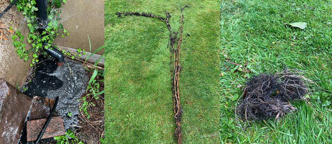 ROOT REMOVAL FROM DRAIN